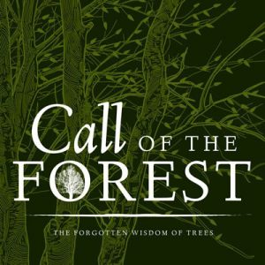 CW8 call-of-the-forest-full-size-image
