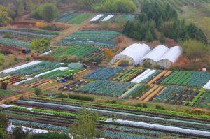 singing frog farm