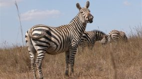 How about some good news:  Success stories from WWF