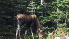 CANADA LOSING WILDLIFE: NEARLY HALF IN DECLINE