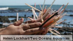 Stop Using Plastic Straws: The Start of Your Personal Anti-plastic Campaign