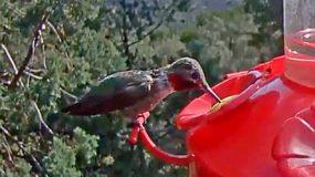 Live-feed Hummingbird Feeder