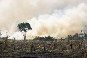 Amazonia Forest burning to open space for pasture