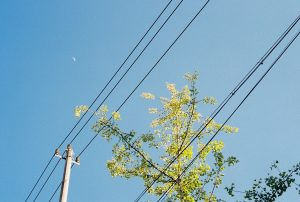 Power lines with a tree in background